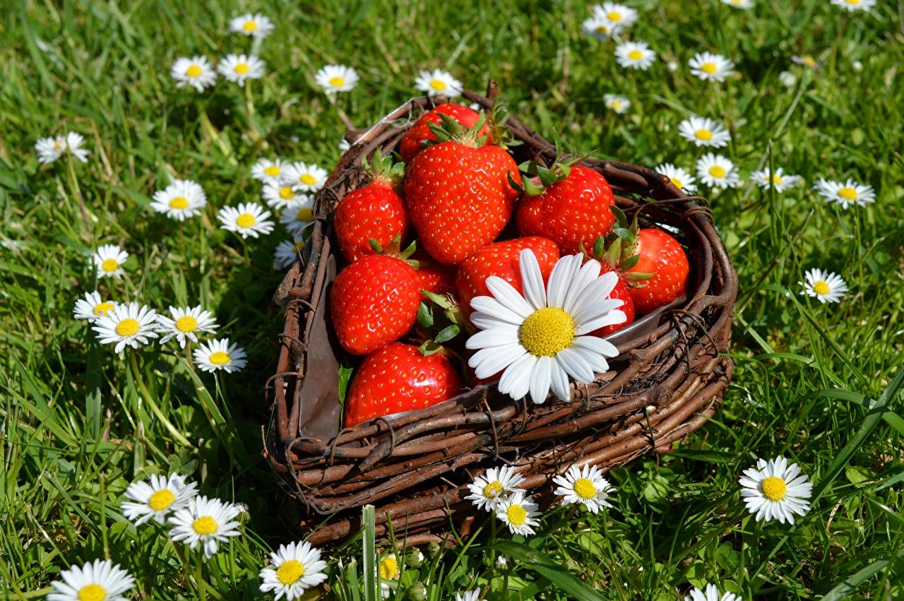 Wallpaper Heart flower matricaria Strawberry Wicker basket Berry Grass Flowers Camomiles