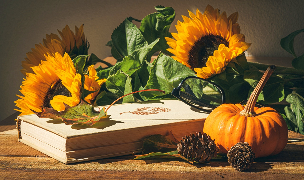 Image Foliage Pumpkin flower Helianthus Food books Pine cone eyeglasses Still-life Leaf Flowers Sunflowers Book Glasses Conifer cone