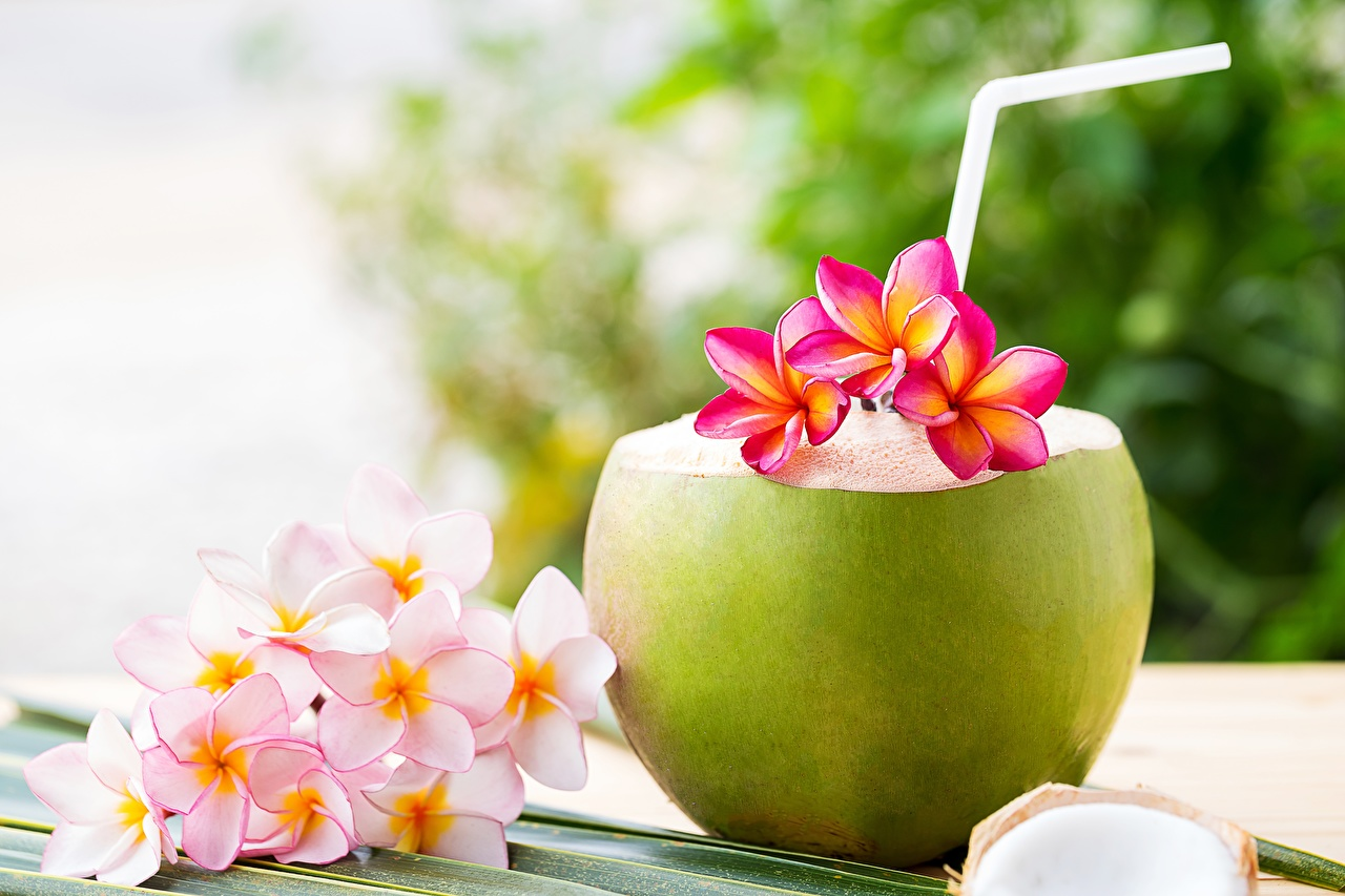 Image flower Plumeria Coconuts Mixed drink Flowers Cocktail