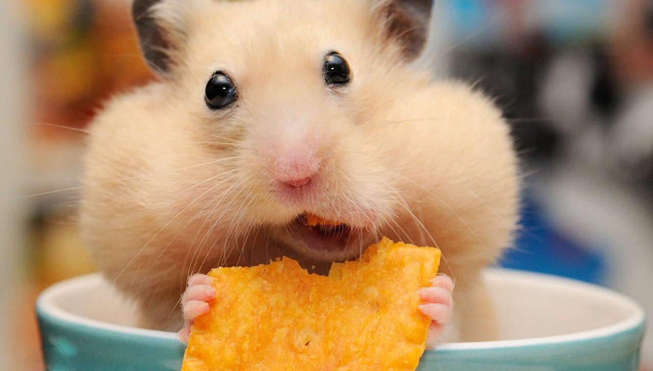 Lustige Bilder Hamster