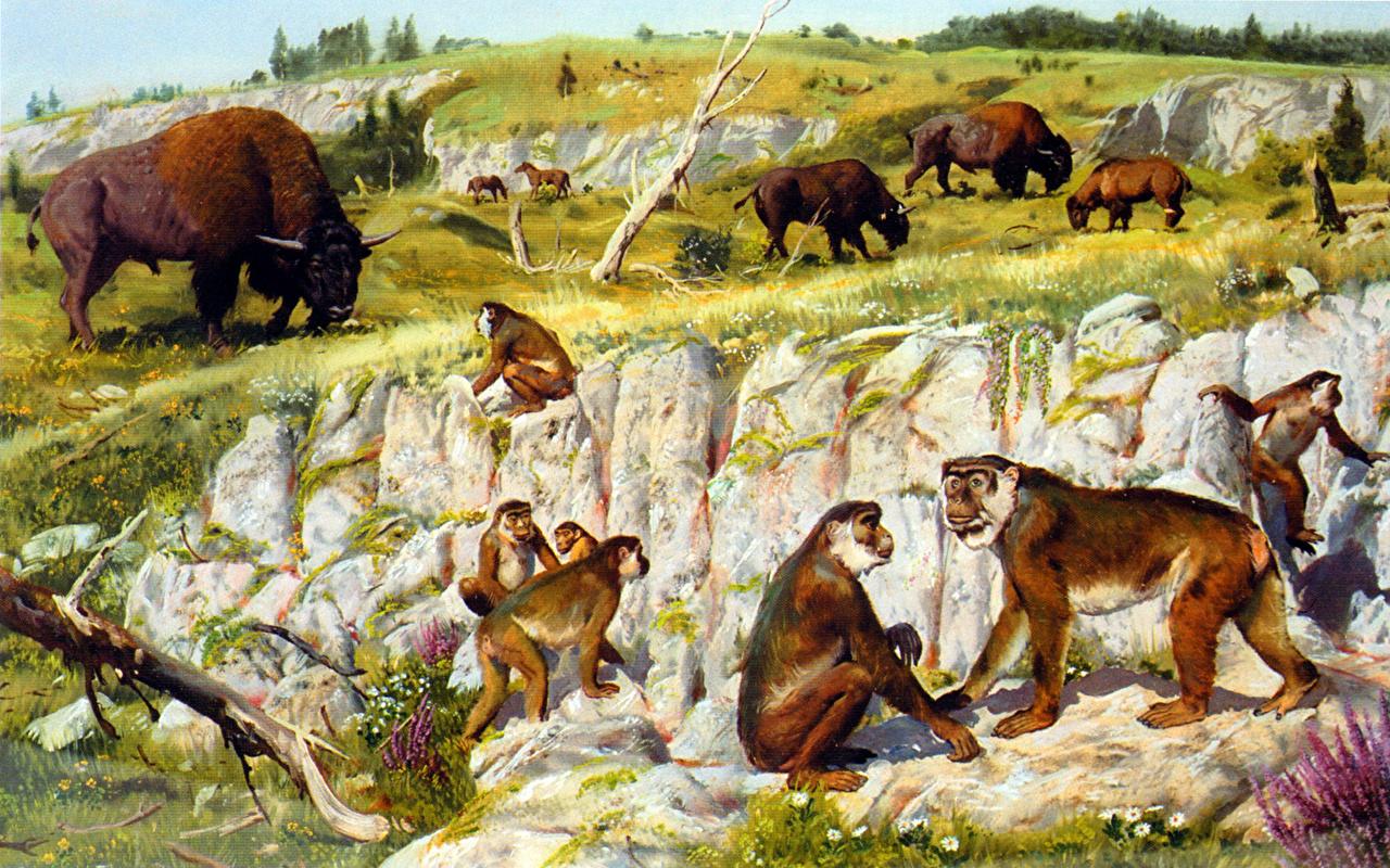 Achtergronden Zdenek Burian Macaca florentina een dier Oude dieren Dieren