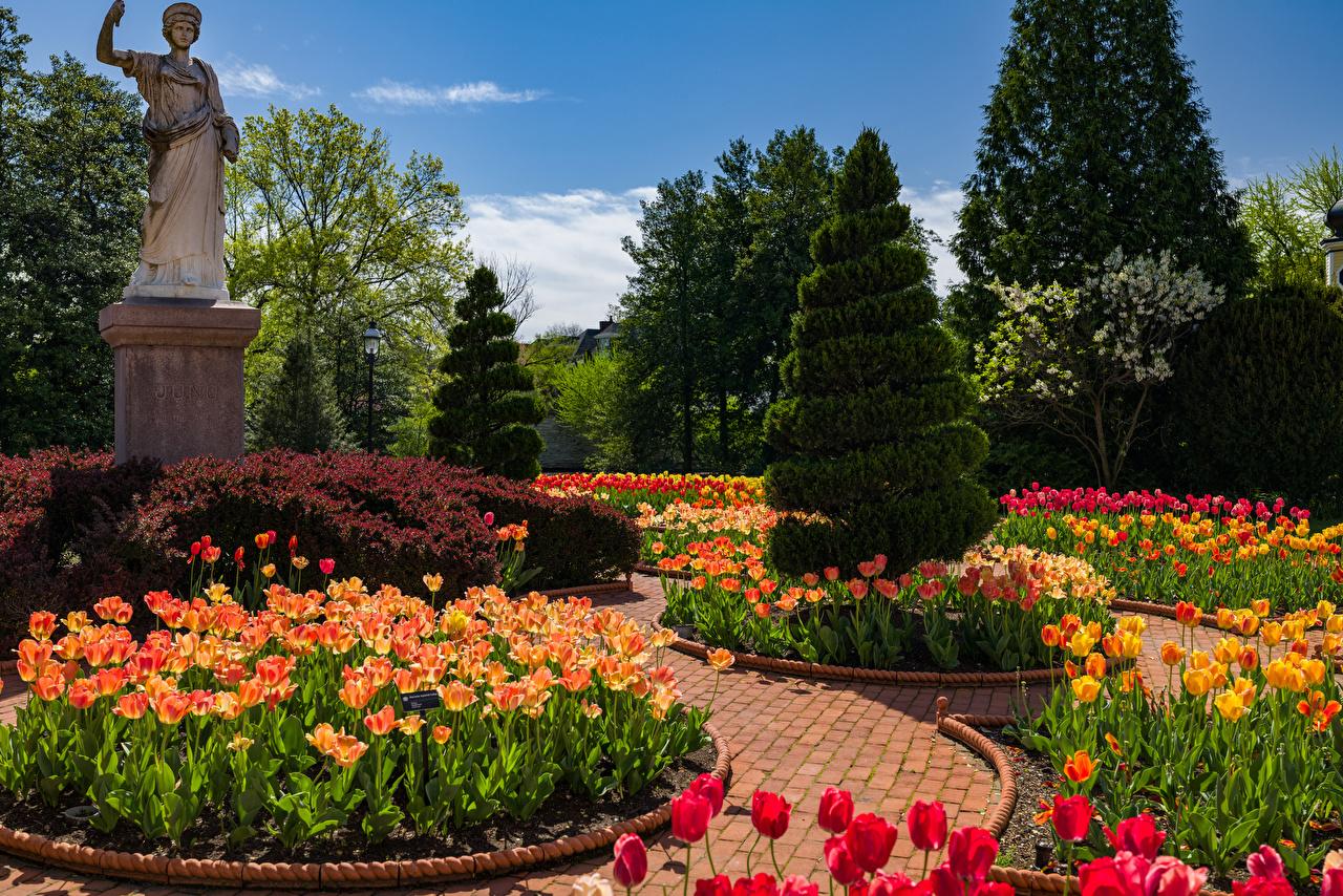 Fotos von USA Denkmal Victorian Garden in the Missouri Botanical Garden Natur Tulpen Fichten Frühling Garten Design Vereinigte Staaten