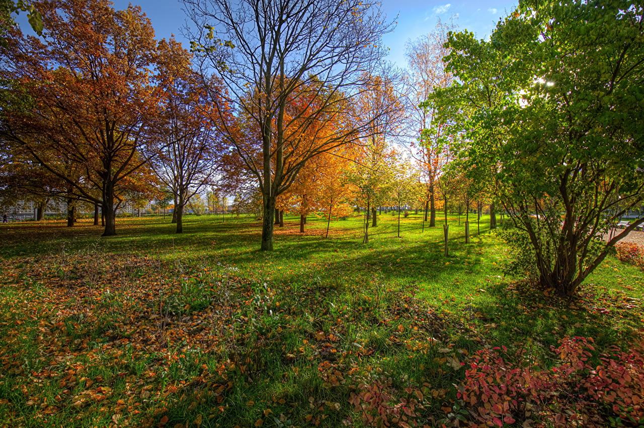 Fotos Sankt Petersburg Russland Blattwerk park Kurakina Dacha Natur Herbst Parks Bäume Blatt Park