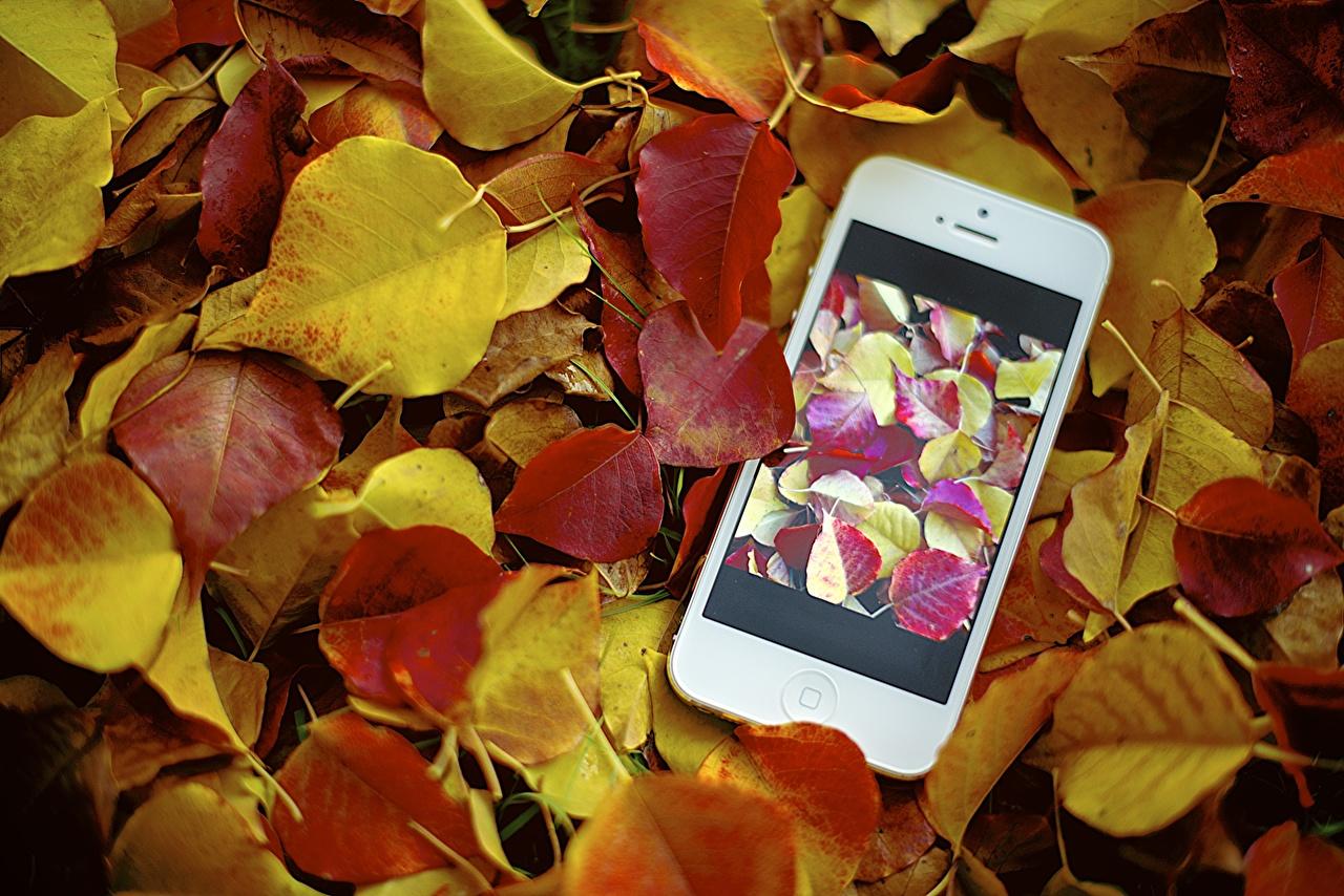 壁紙 秋 アップル クローズアップ Iphone Jamie Frith 電話機