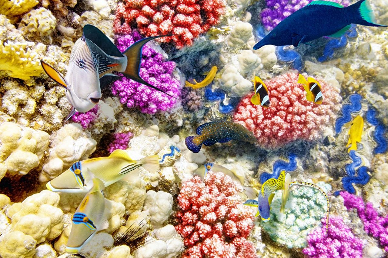 Фотография Рыбы Подводный мир Кораллы Животные животное