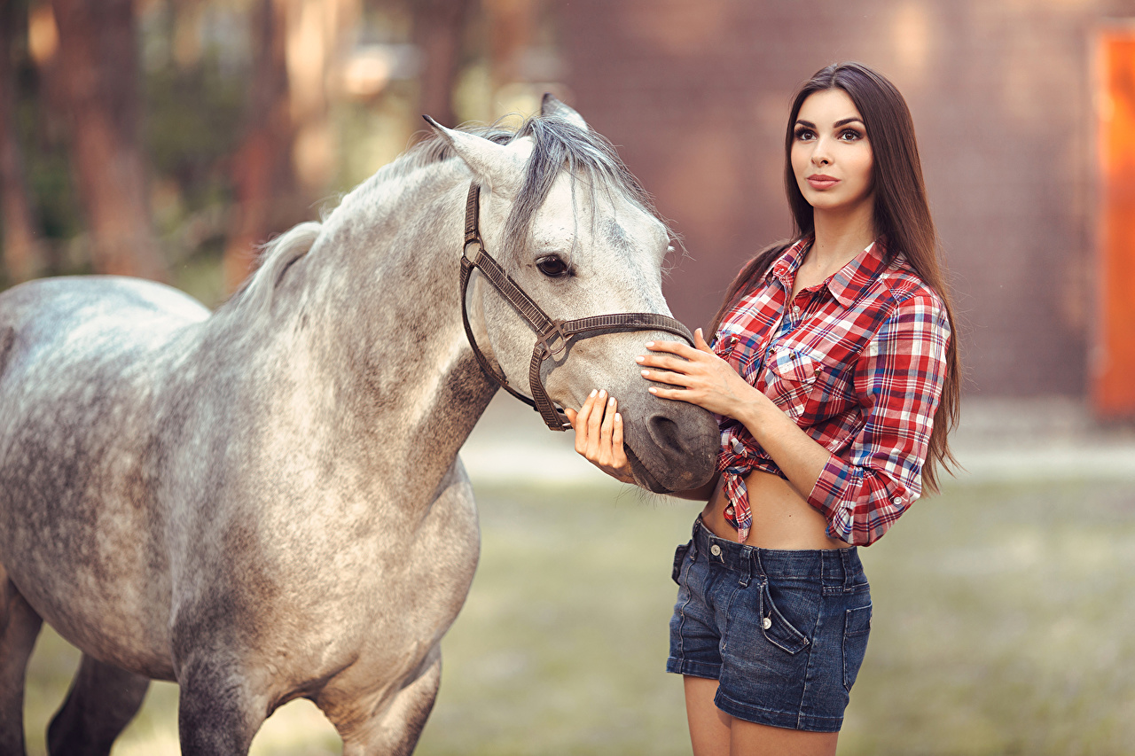 Image Horses Brown haired young woman Formal shirt Shorts animal horse Girls female Animals