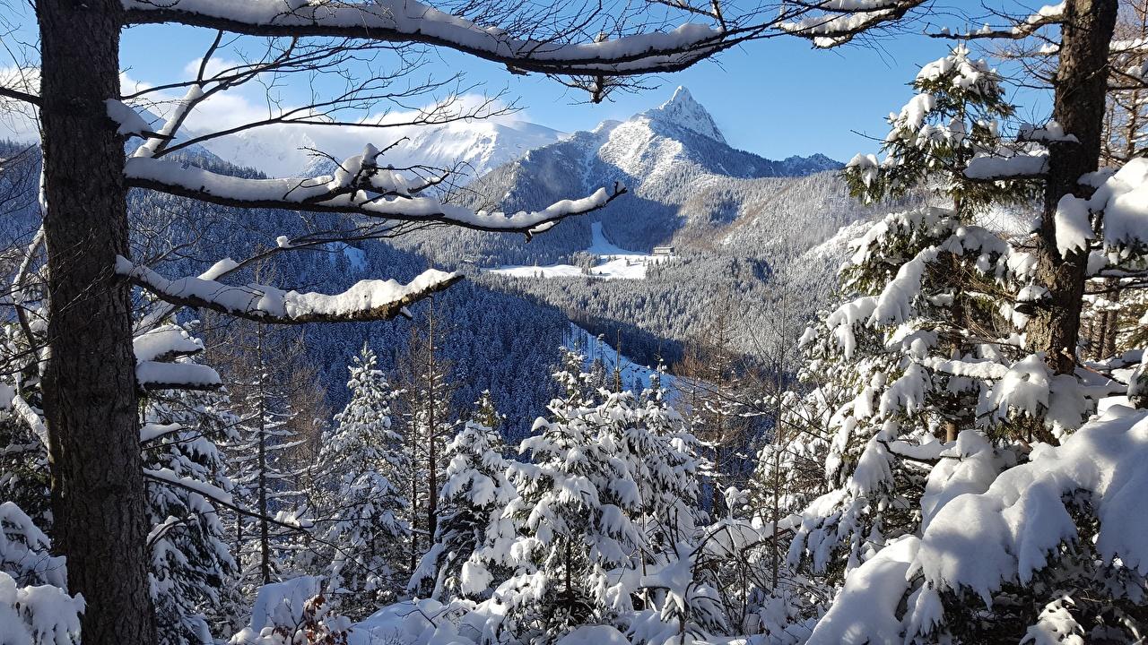 Sfondi del desktop Polonia Tatra Natura Inverno Montagne Neve Alberi montagna