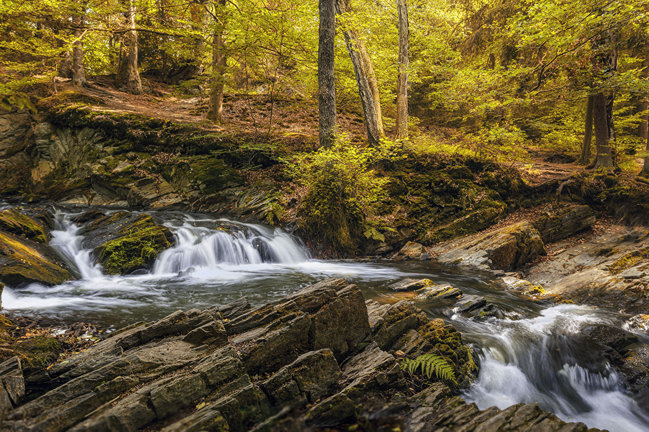 Wallpaper Germany Alexisbad Autumn Nature Waterfalls forest Moss Forests