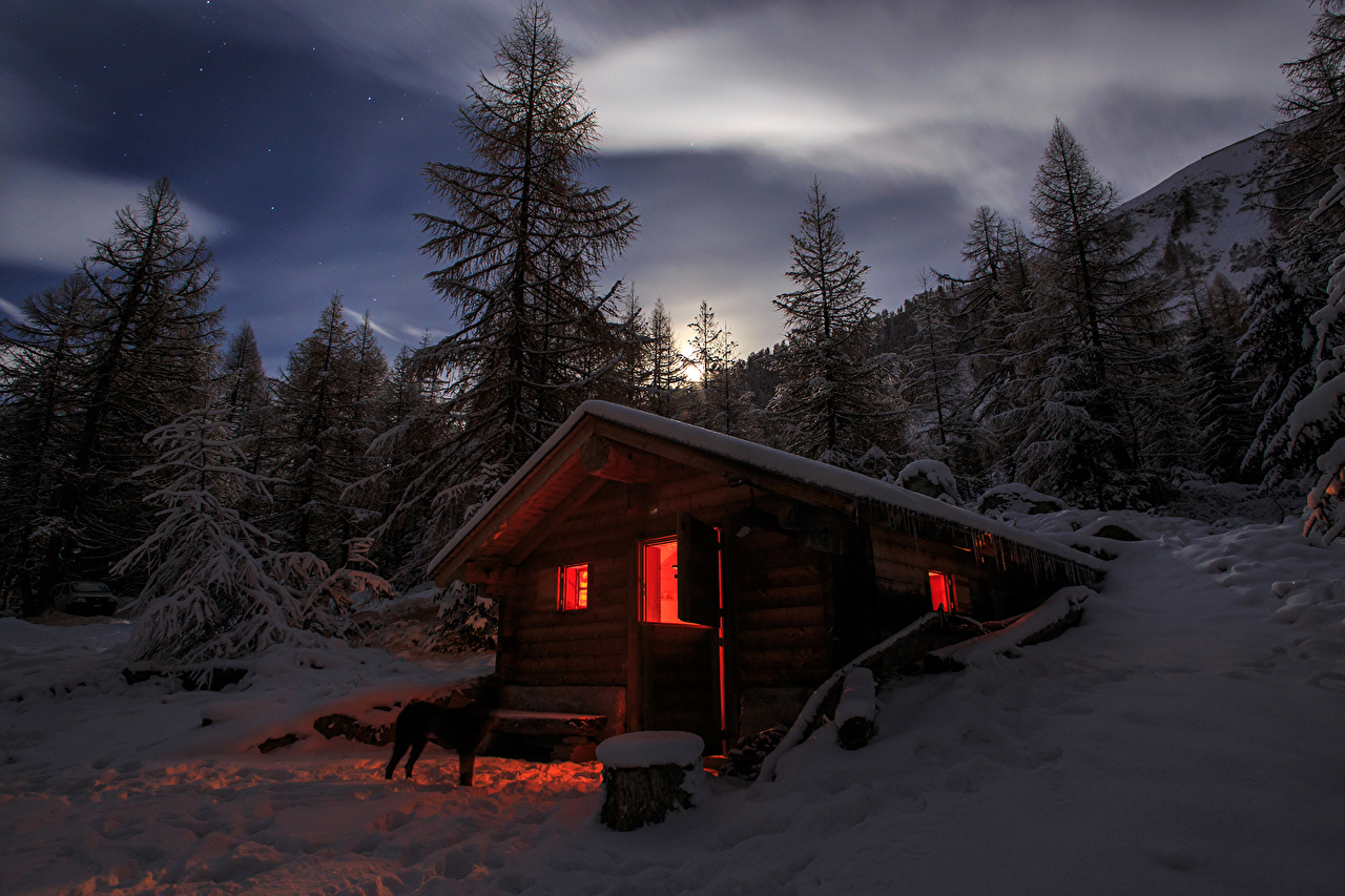 Pictures Alps Switzerland Winter Spruce Nature Snow night time Night
