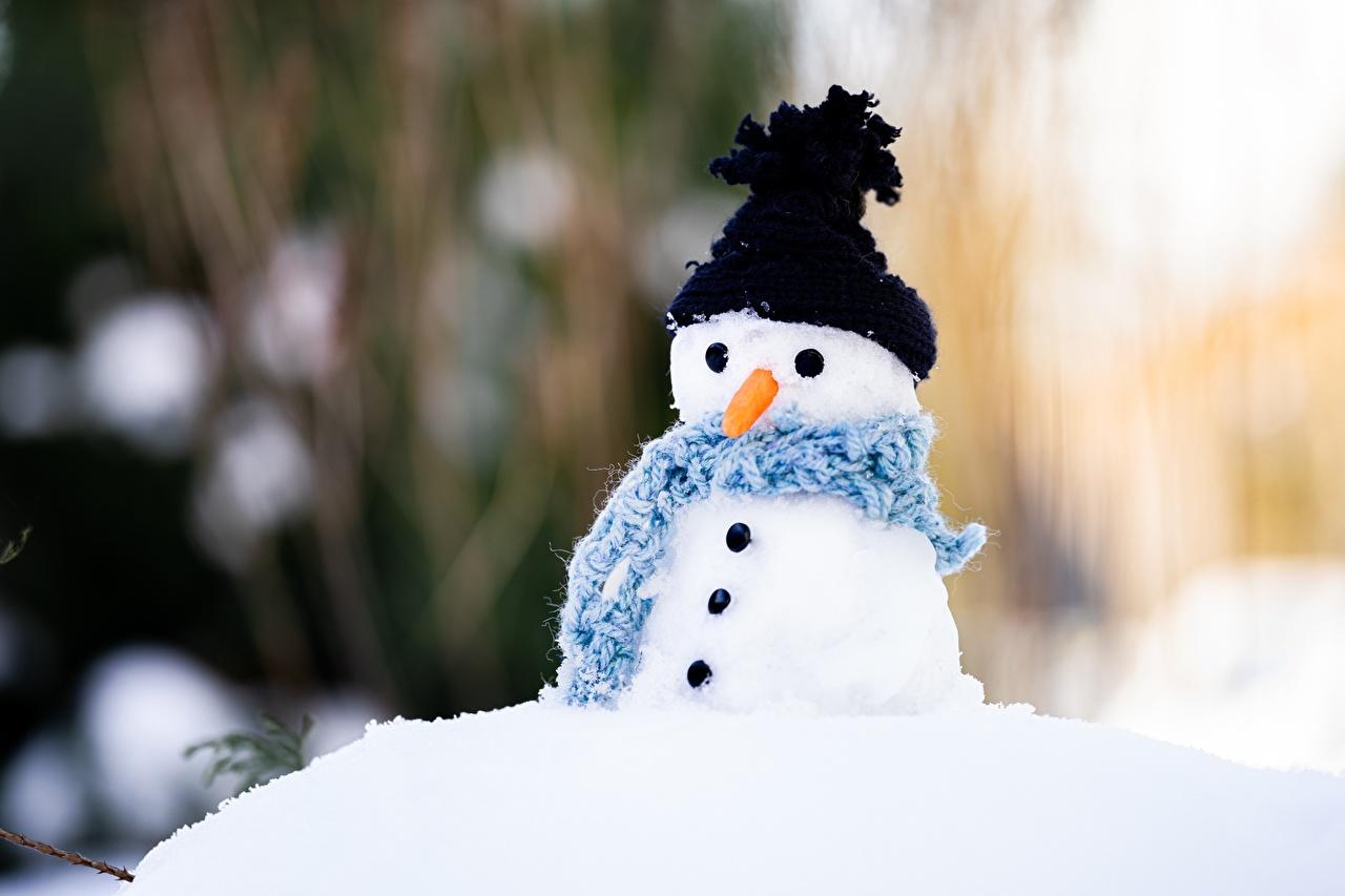 Обои для рабочего стола шарфе Размытый фон Шапки Морковь снеговик Шарф шарфом боке шапка в шапке морковка Снеговики снеговика