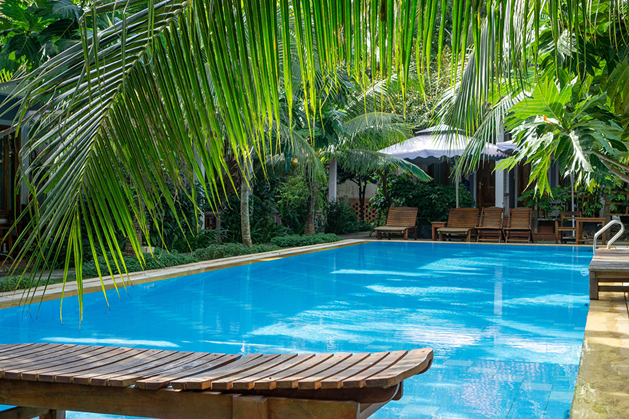 Image Vietnam Pools Resorts Phu Quoc Island Nature Palms Branches Spa town Swimming bath palm trees