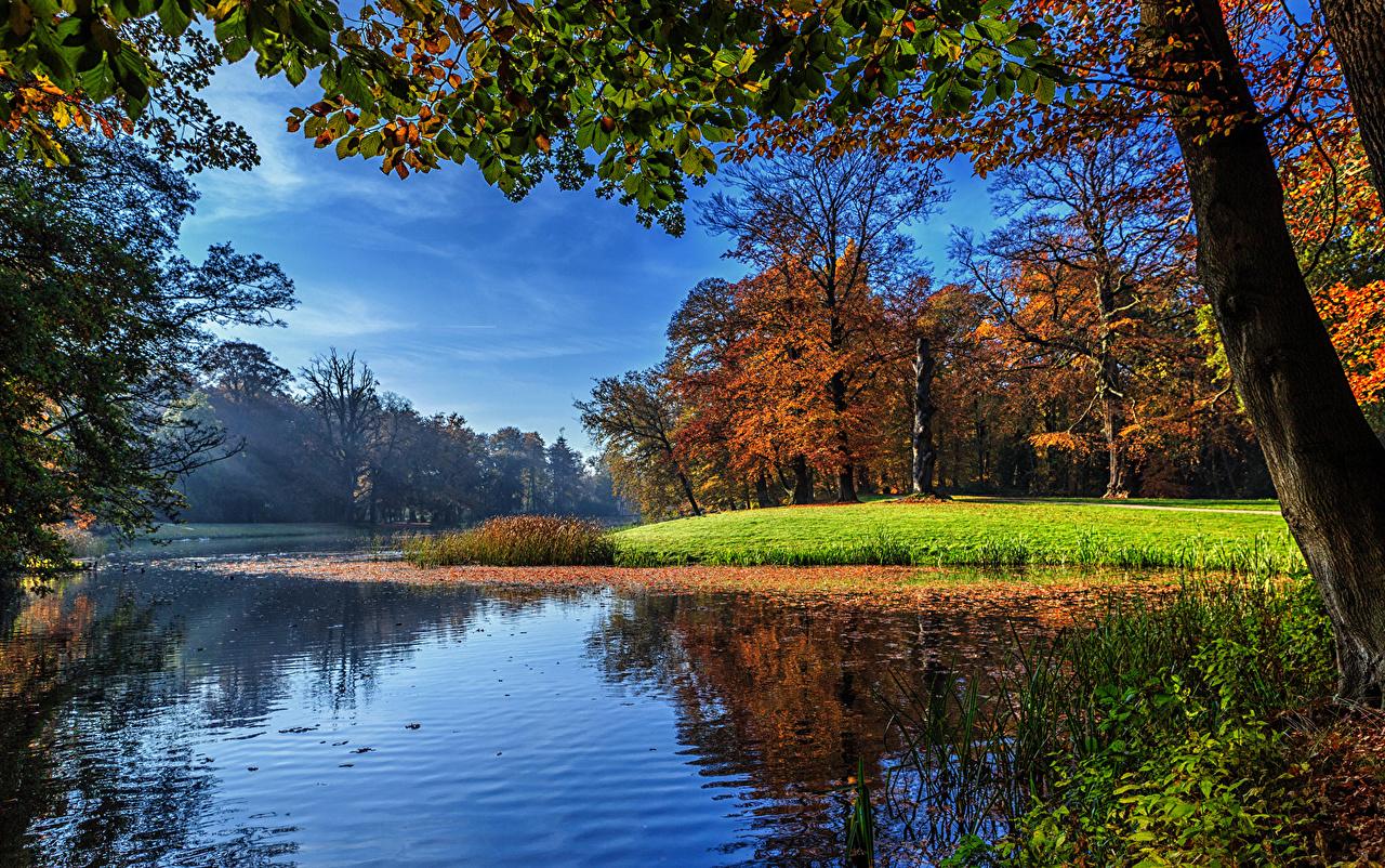 壁紙 オランダ 川 秋 風景写真 ユトレヒト Darthuizen 木 自然