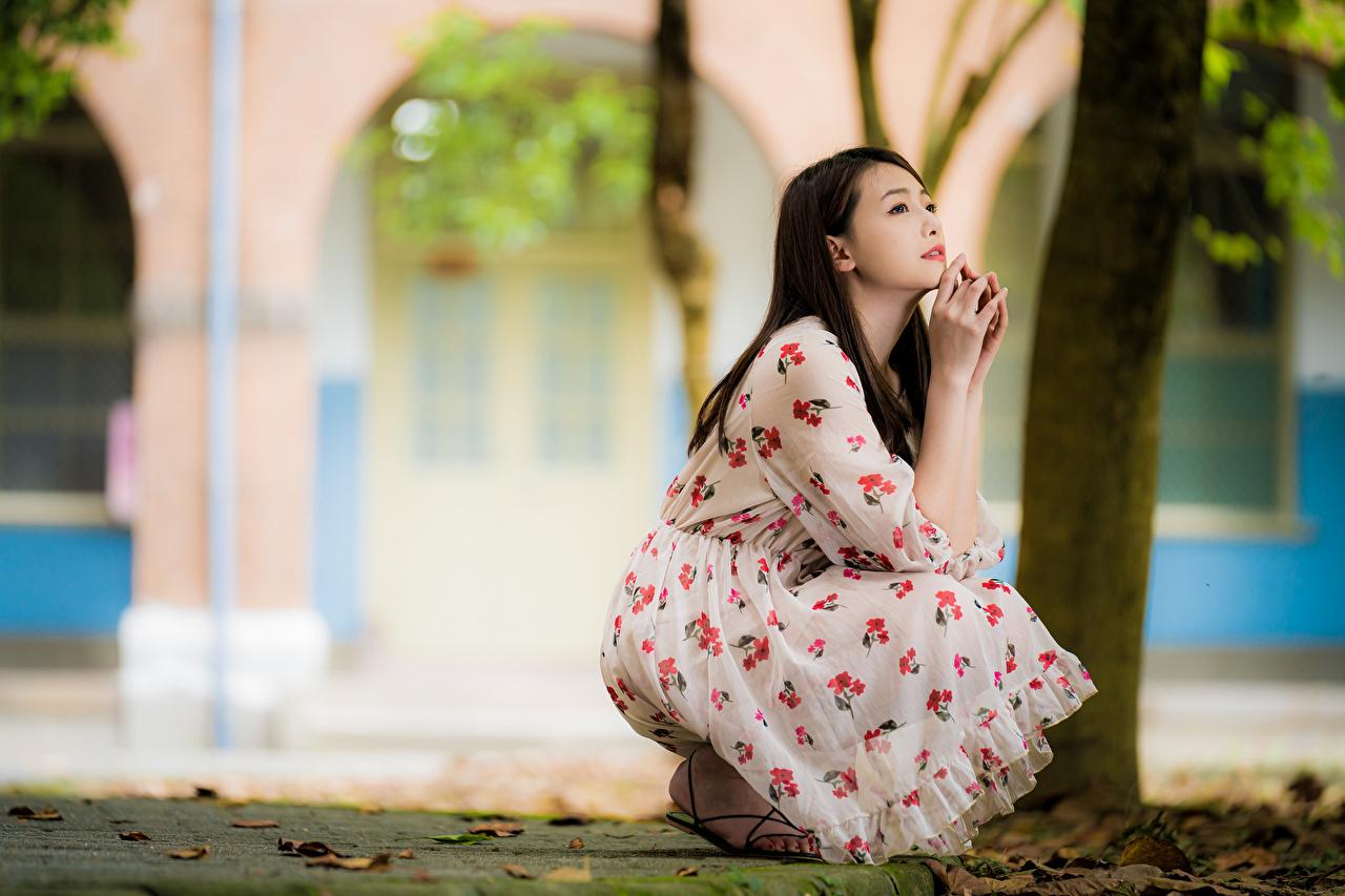 Fotos Braunhaarige Bokeh posiert junge frau Asiatische Sitzend Kleid Braune Haare unscharfer Hintergrund Pose Mädchens junge Frauen Asiaten asiatisches sitzt sitzen