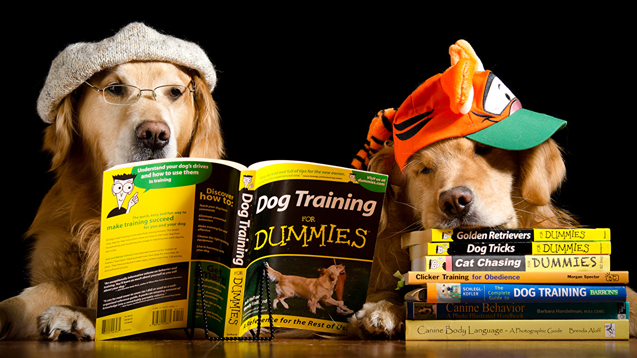 Pictures Humor Animals Retriever dog Two Book Glasses read Baseball cap funny animal Dogs 2 books eyeglasses Reading