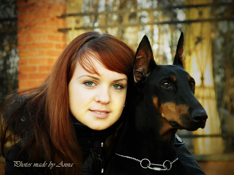 Фотографии Доберман собака шатенки лица Девушки смотрит Животные доберманы Собаки Шатенка Лицо девушка молодая женщина молодые женщины Взгляд смотрят животное