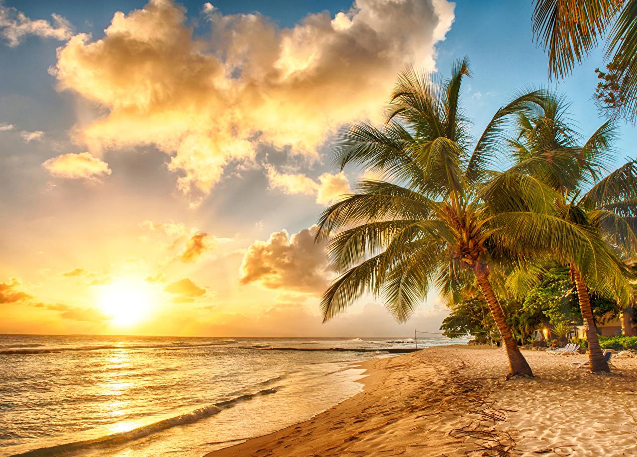 Fotos von Barbados Caribbean Natur Himmel Tropen Palmen Sonnenaufgänge und Sonnenuntergänge Küste Wolke Palmengewächse Morgendämmerung und Sonnenuntergang