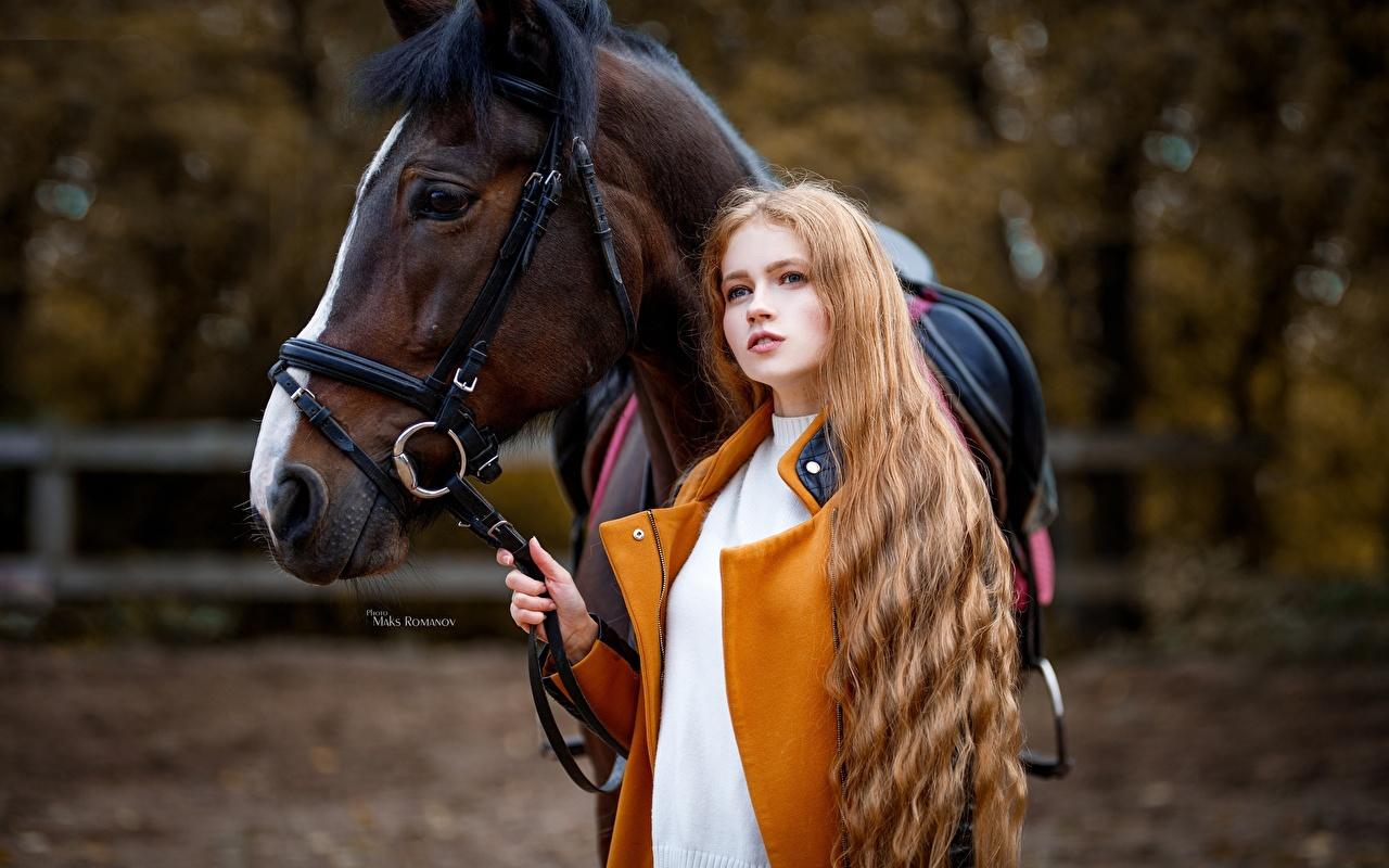 Картинки Лошади Шатенка Размытый фон Девушки смотрит лошадь шатенки боке девушка молодая женщина молодые женщины Взгляд смотрят