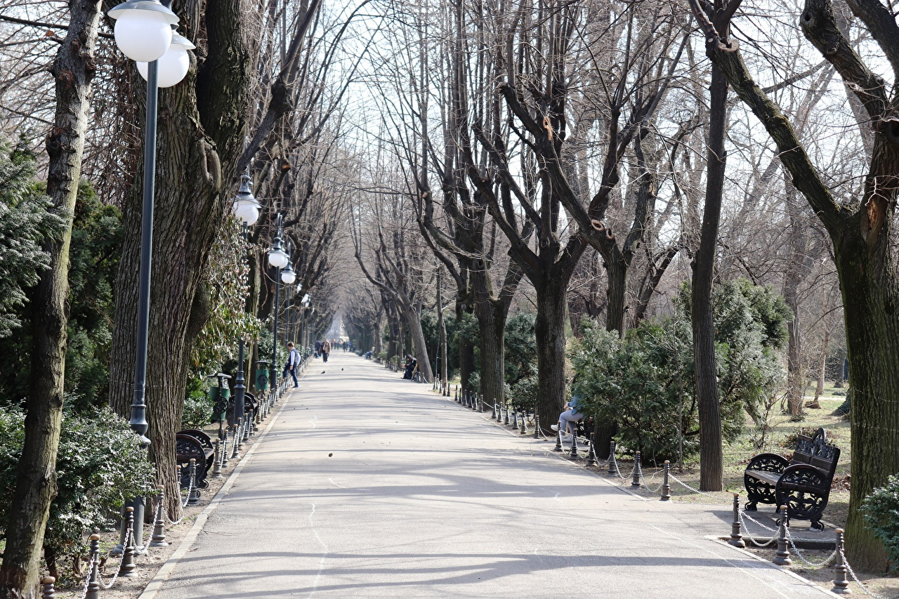 Photos Romania Bucharest Avenue park Bench Pavement Street lights Trees Cities Allee Parks
