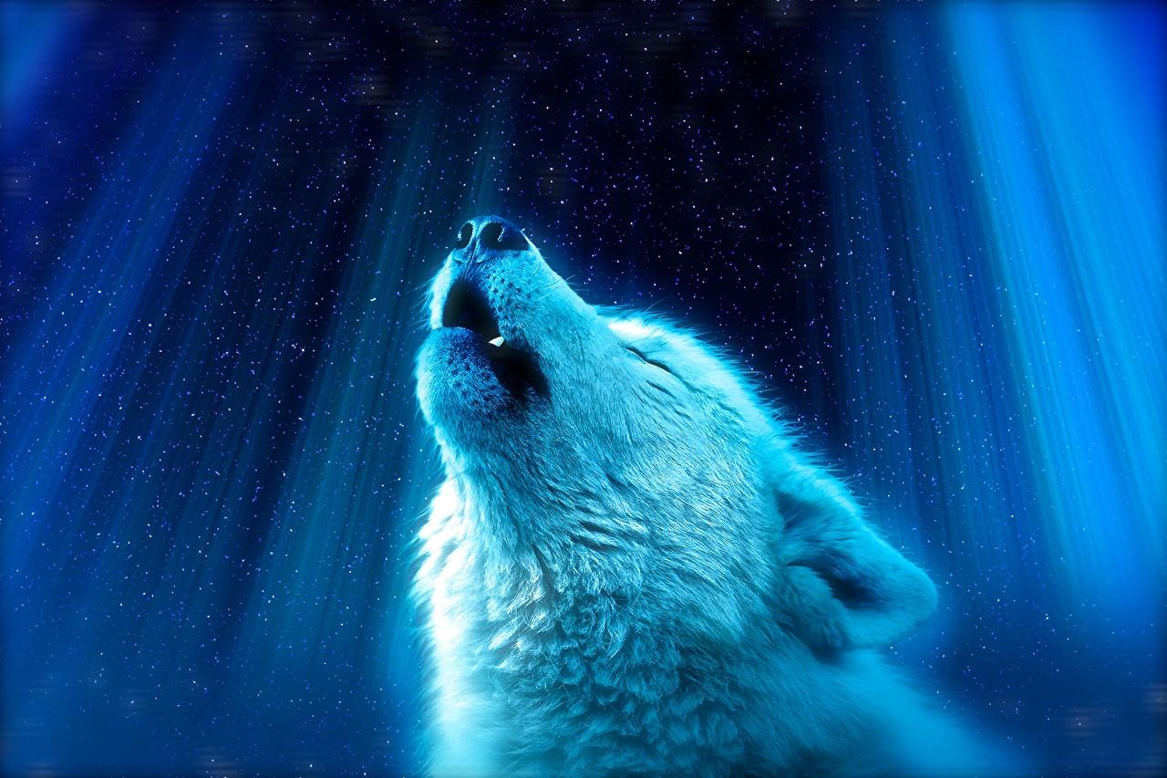 Bilder von Wolf Kopf Tiere