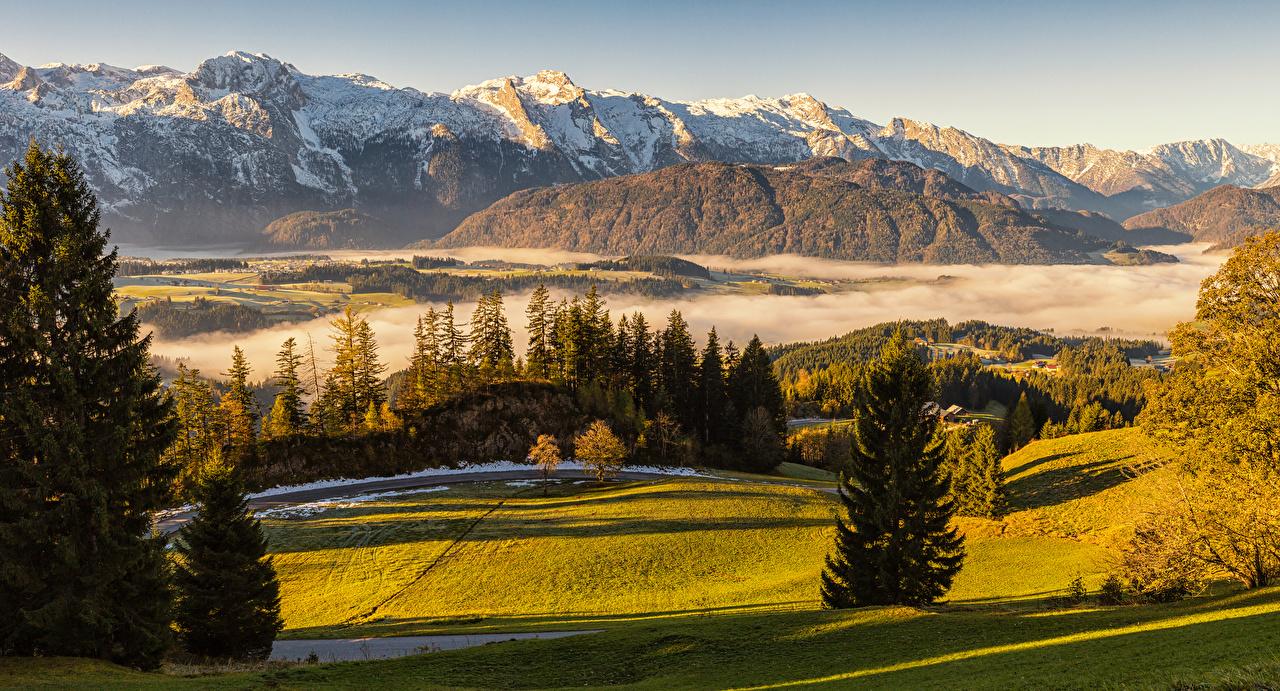 Picture Alps Austria Fog Nature Spruce mountain Grasslands Mountains Meadow