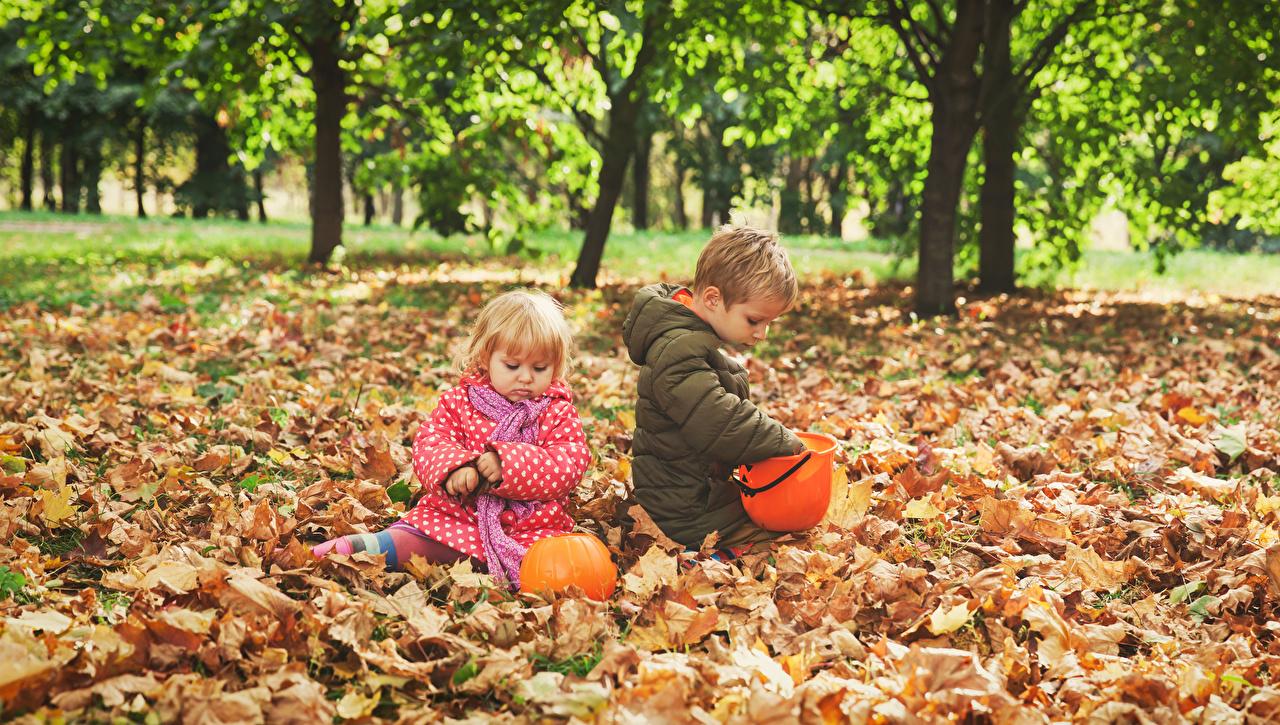 Images Little girls Boys Foliage Children Two Autumn Pumpkin Leaf child 2