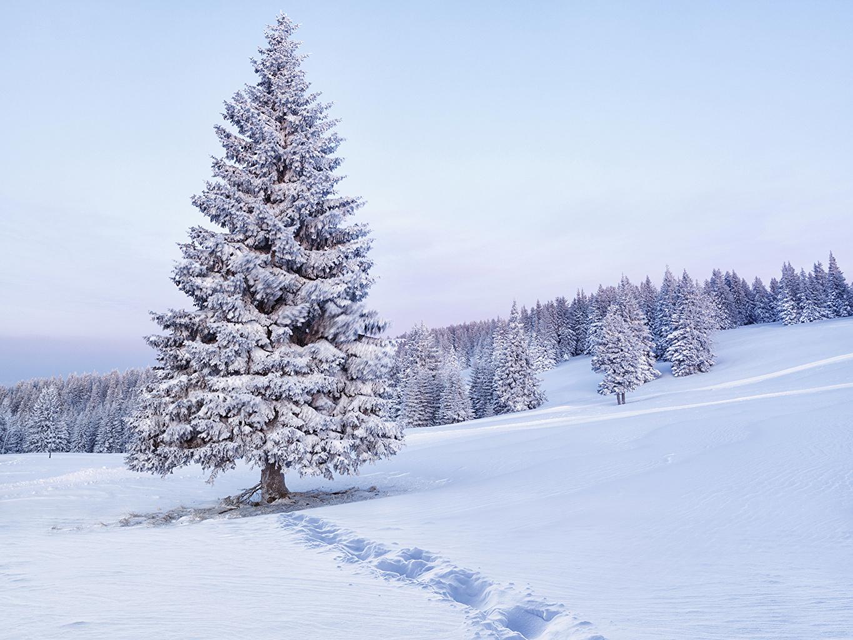 Foto Natur Winter Fichten Schnee Wälder Bäume Jahreszeiten Wald
