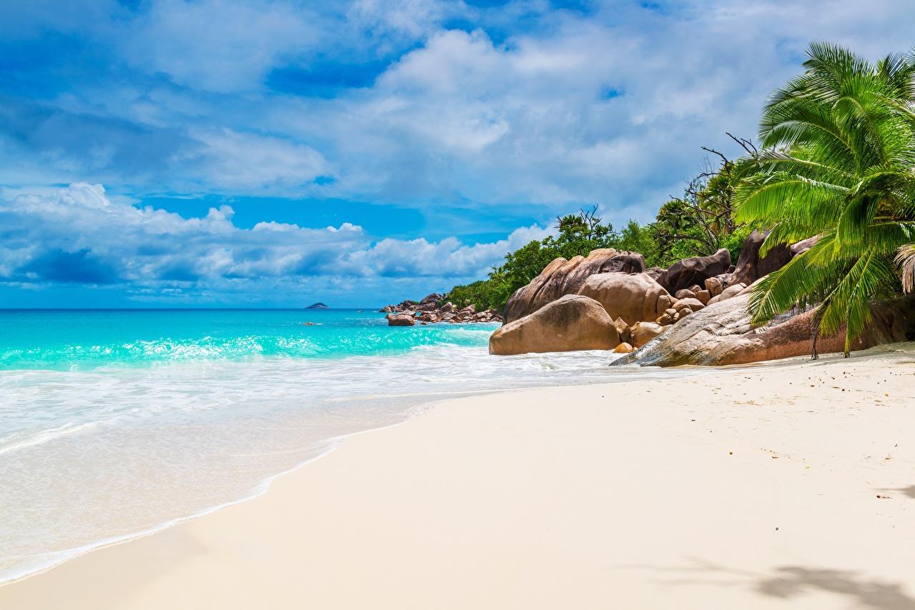 Images Seychelles beaches Sea Nature Sand Palms Tropics Stones Beach palm trees stone