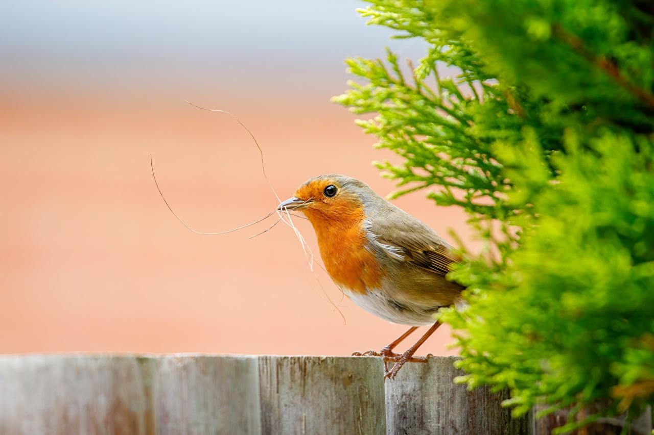 Bilder Vögel Bokeh Seitlich Tiere Vogel unscharfer Hintergrund ein Tier