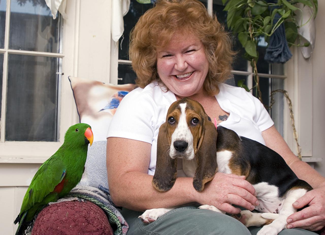 Tapety Basset Hound papuga Psy domowe brązowowłosa dziewczyna Uśmiech Kobieta zwierzę Papugi pies domowy Szatenka dziewczyna z brązowymi włosami Zwierzęta
