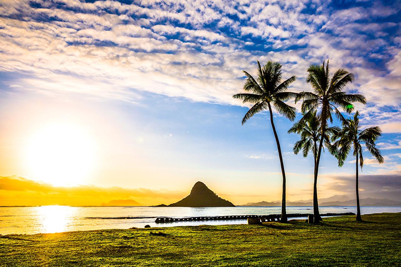 壁紙 アメリカ合衆国 風景写真 朝焼けと日没 海岸 ハワイ州 ヤシ
