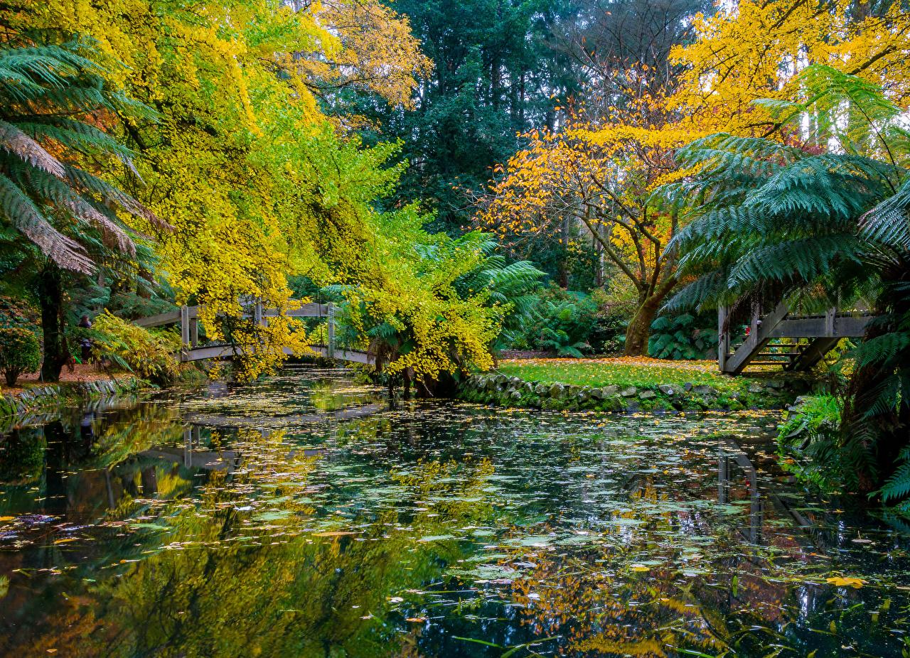 Foto Australien Alfred Nicholas Memorial Gardens Natur Herbst Brücken Park Teich Bäume