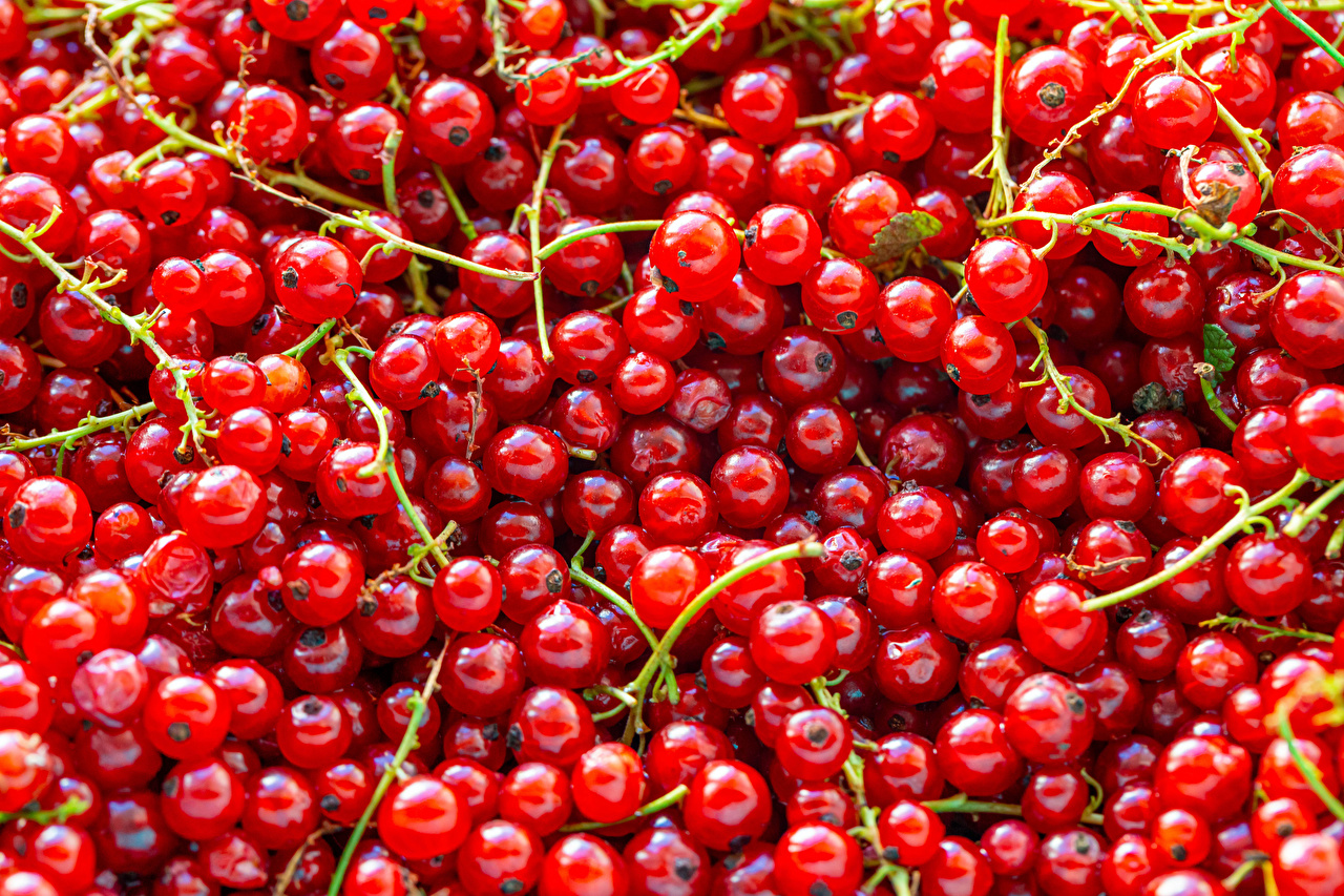 Picture Texture Red Currant Food