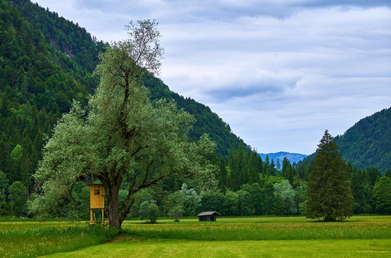 Picture Austria Kessen Tyrol Nature Mountains Grasslands Trees