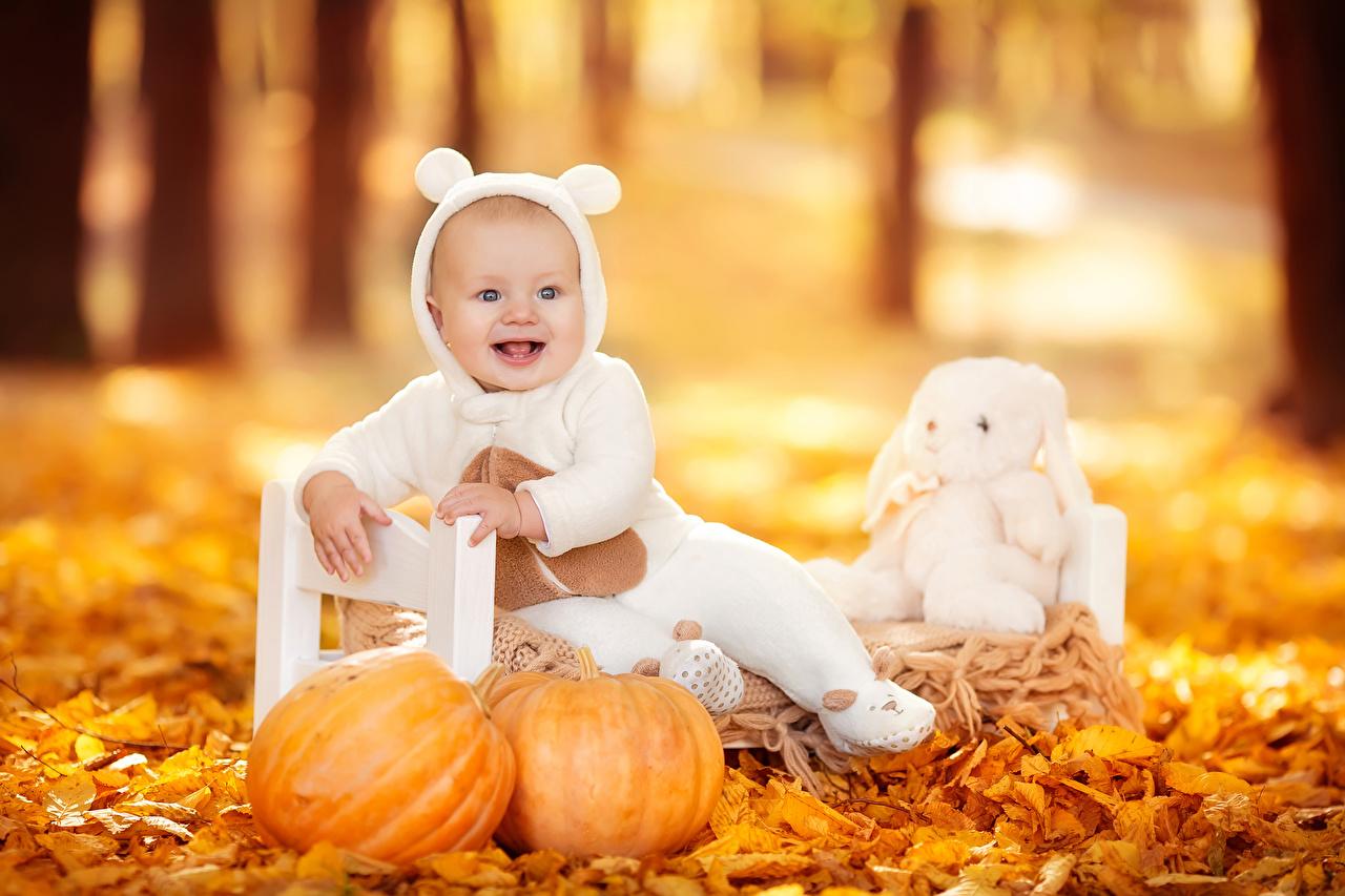 Bilder von Säugling Blattwerk Freude Kinder Herbst Kürbisse sitzt Baby Blatt Glücklich fröhliches glückliche fröhlicher glücklicher glückliches sitzen Sitzend