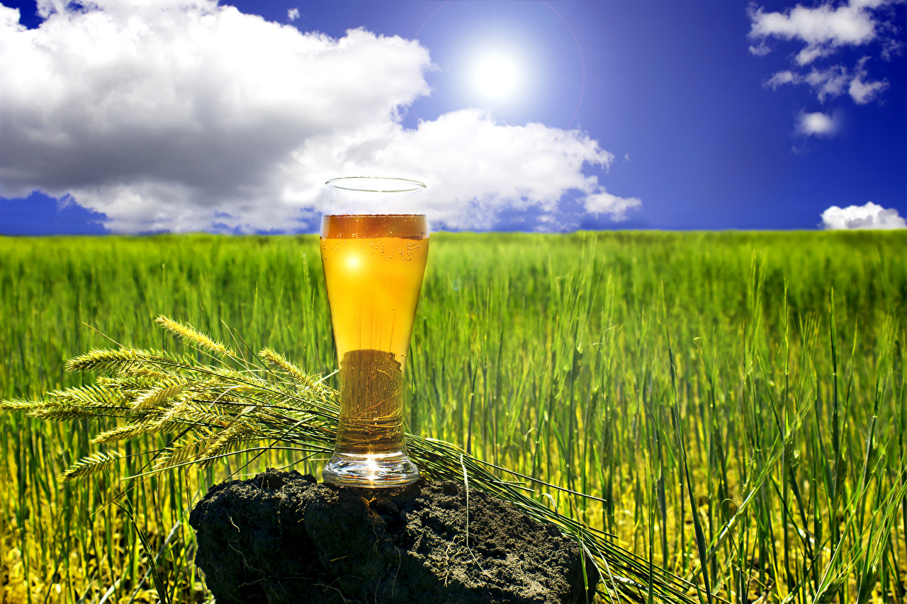 Fotos Bier Ähre Trinkglas Steine Lebensmittel