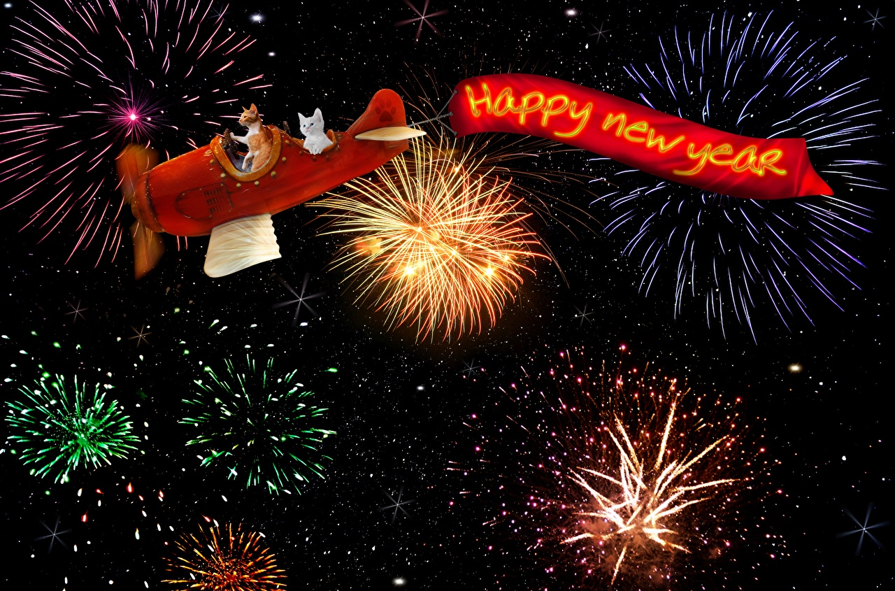 Photo Cats Airplane Fireworks Christmas English cat New year