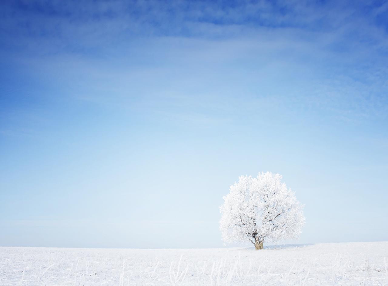 Image Nature Winter Sky Snow Trees