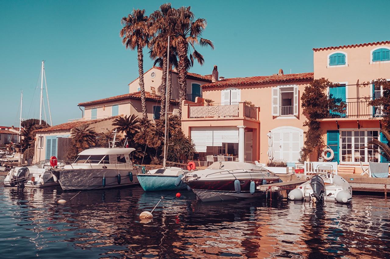 Picture France Saint-Tropez, Var department, arrondissement Draguignan, canton Saint-Maxime palm trees Pier speedboat Cities Palms Berth Marinas Motorboat powerboat