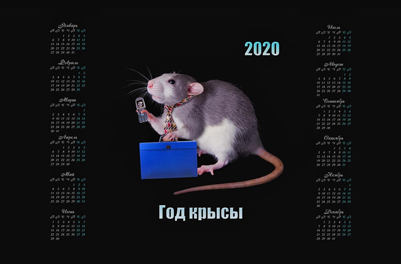 Desktop Hintergrundbilder 2020 Ratten russischer Kalender Schwarzer Hintergrund Russische russisches