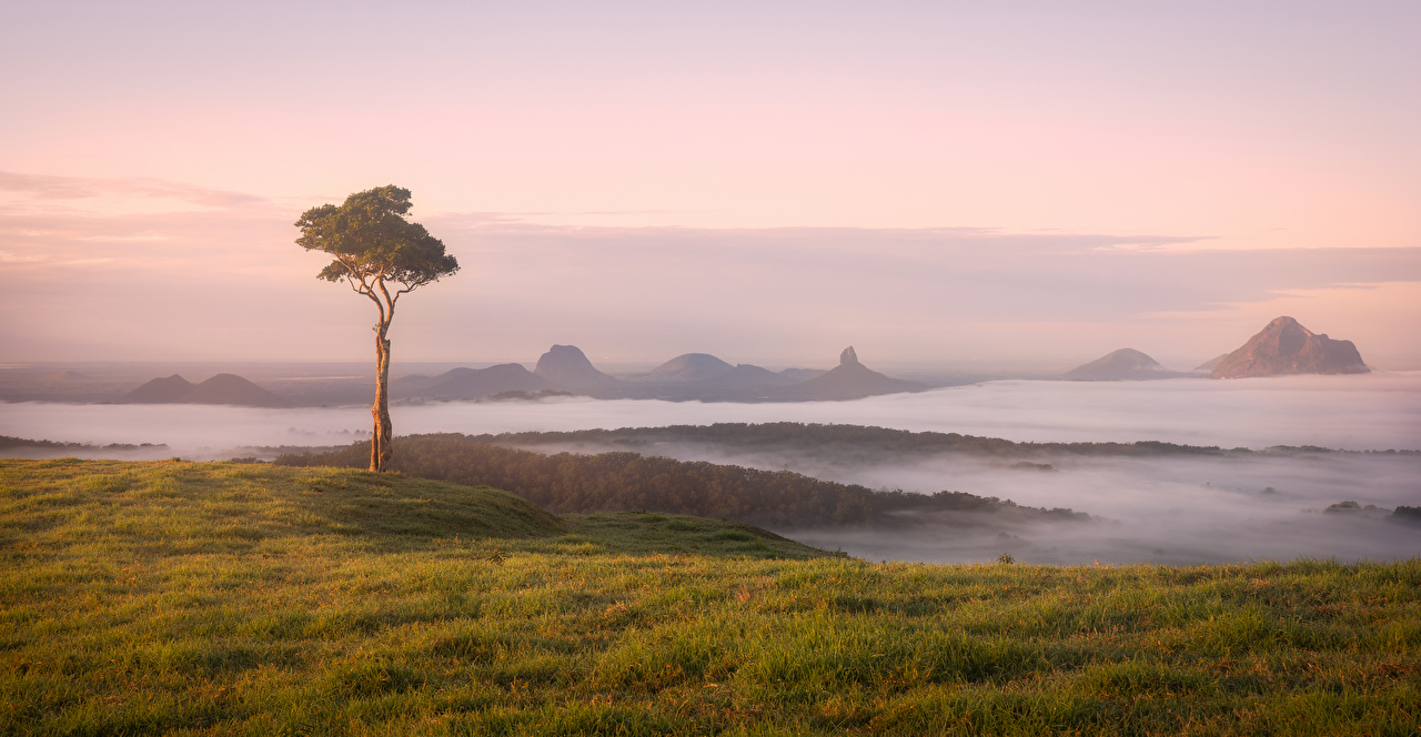 Pictures Australia Maleny Fog Nature Coast Trees
