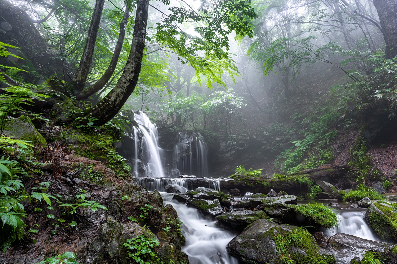 Desktop Wallpapers Fog Nature Stream Waterfalls Moss Stones brook Creek Creeks Streams stone