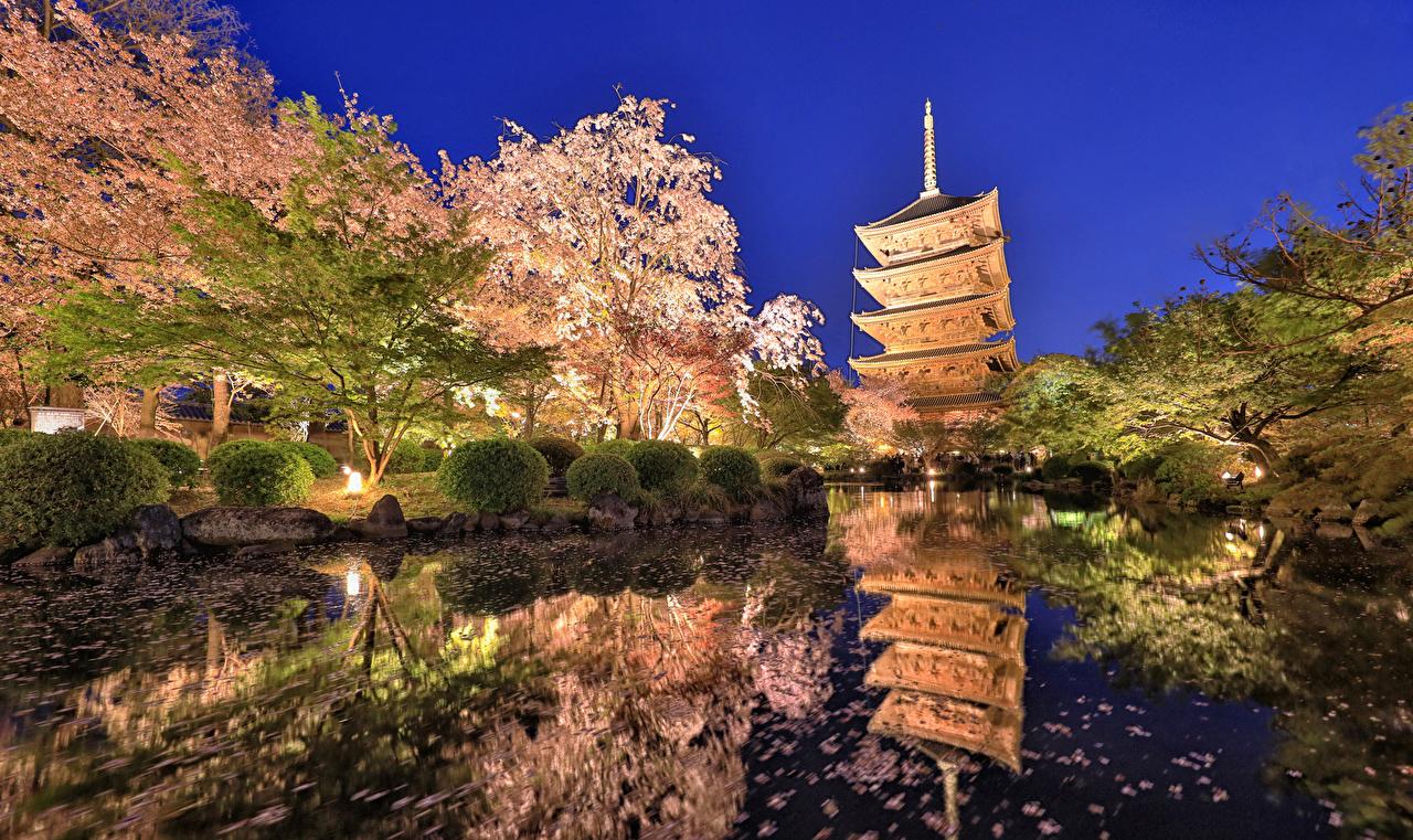 Bilder von Präfektur Tokio Japan Natur Park Teich Abend Strauch Blühende Bäume