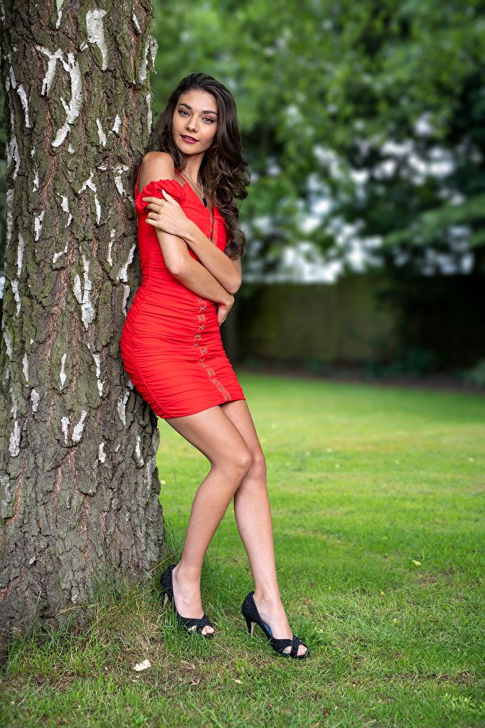 Bilder von Model Elle posiert Mädchens Bein Baumstamm Blick Kleid  für Handy Pose junge frau junge Frauen Starren