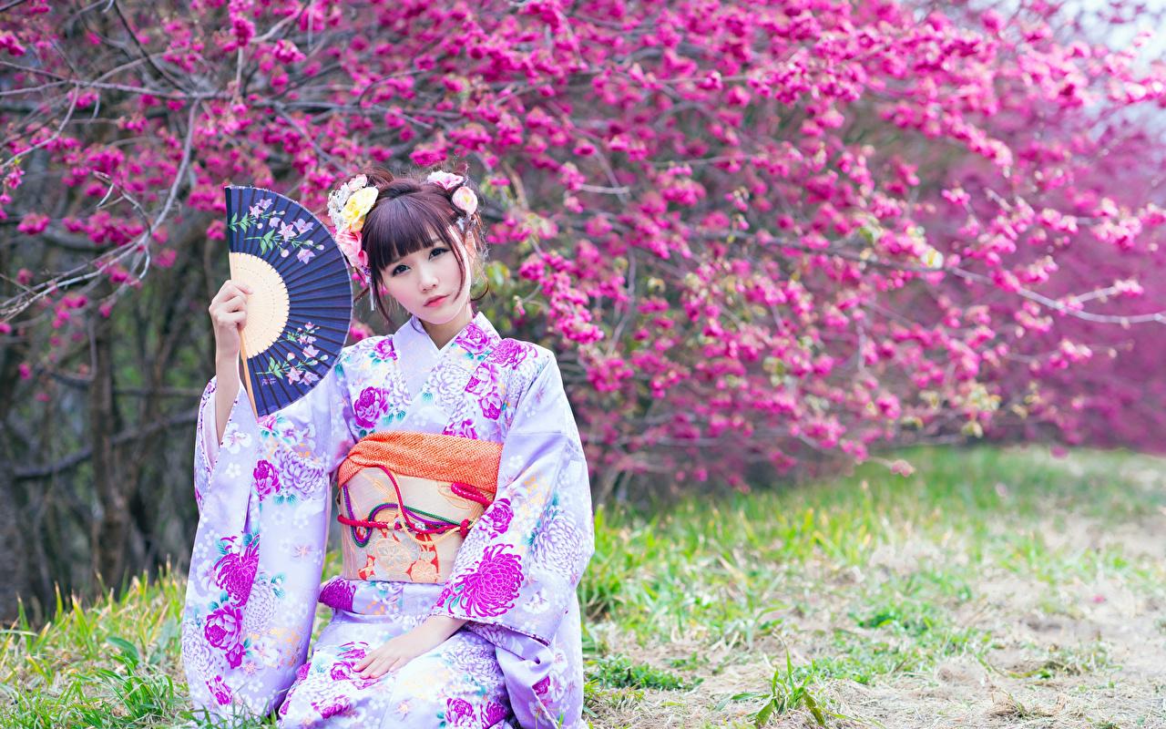 Bilder Braunhaarige unscharfer Hintergrund Fächer Kimono junge frau Asiaten Starren Blühende Bäume Braune Haare Bokeh Mädchens junge Frauen Asiatische asiatisches Blick