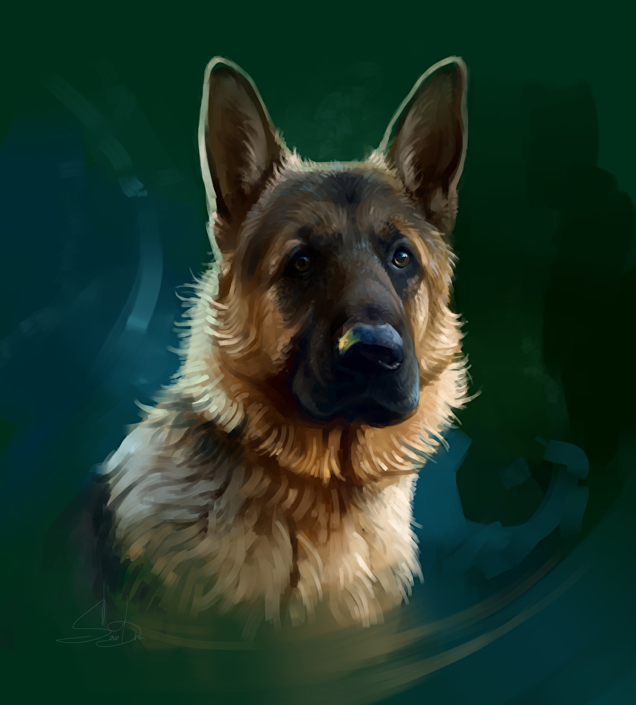 Bilder Shepherd Hunde Tiere Blick Gezeichnet Starren