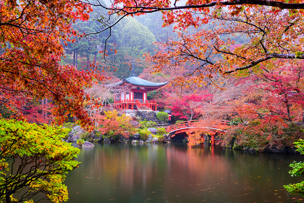 Pictures Kyoto Japan Nature Autumn Pond Parks Pagodas Branches