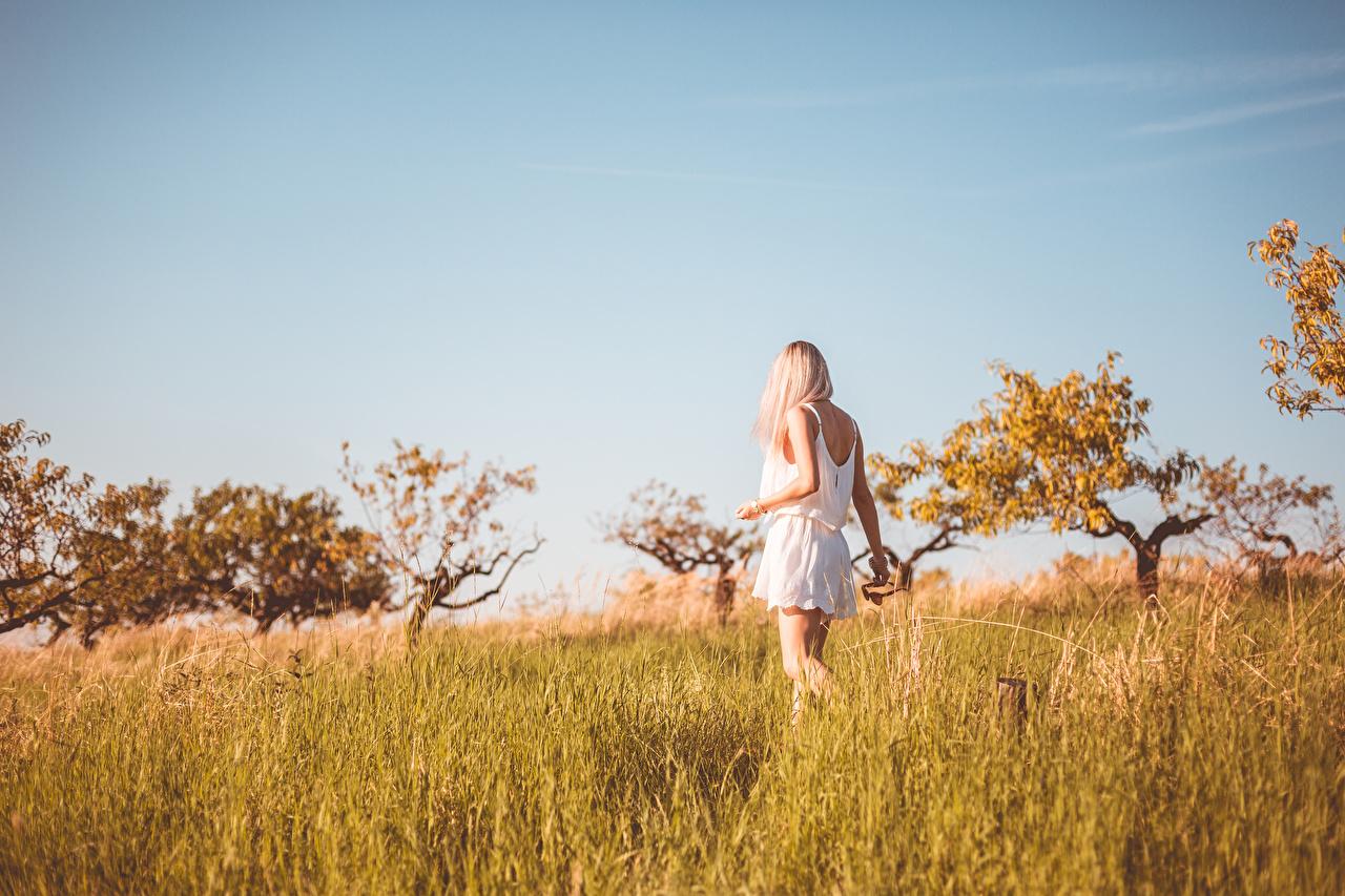 Fotos Blond Mädchen unscharfer Hintergrund geht Sommer Mädchens Gras Kleid Blondine Bokeh gehen Wanderung junge frau Spaziergang junge Frauen