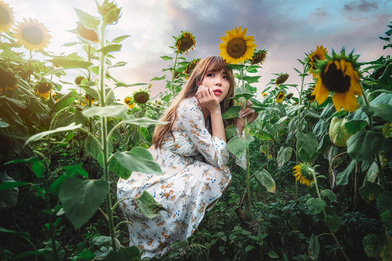 Photo Girls Asiatic Sunflowers sit Staring Dress female young woman Asian Helianthus Sitting Glance gown frock