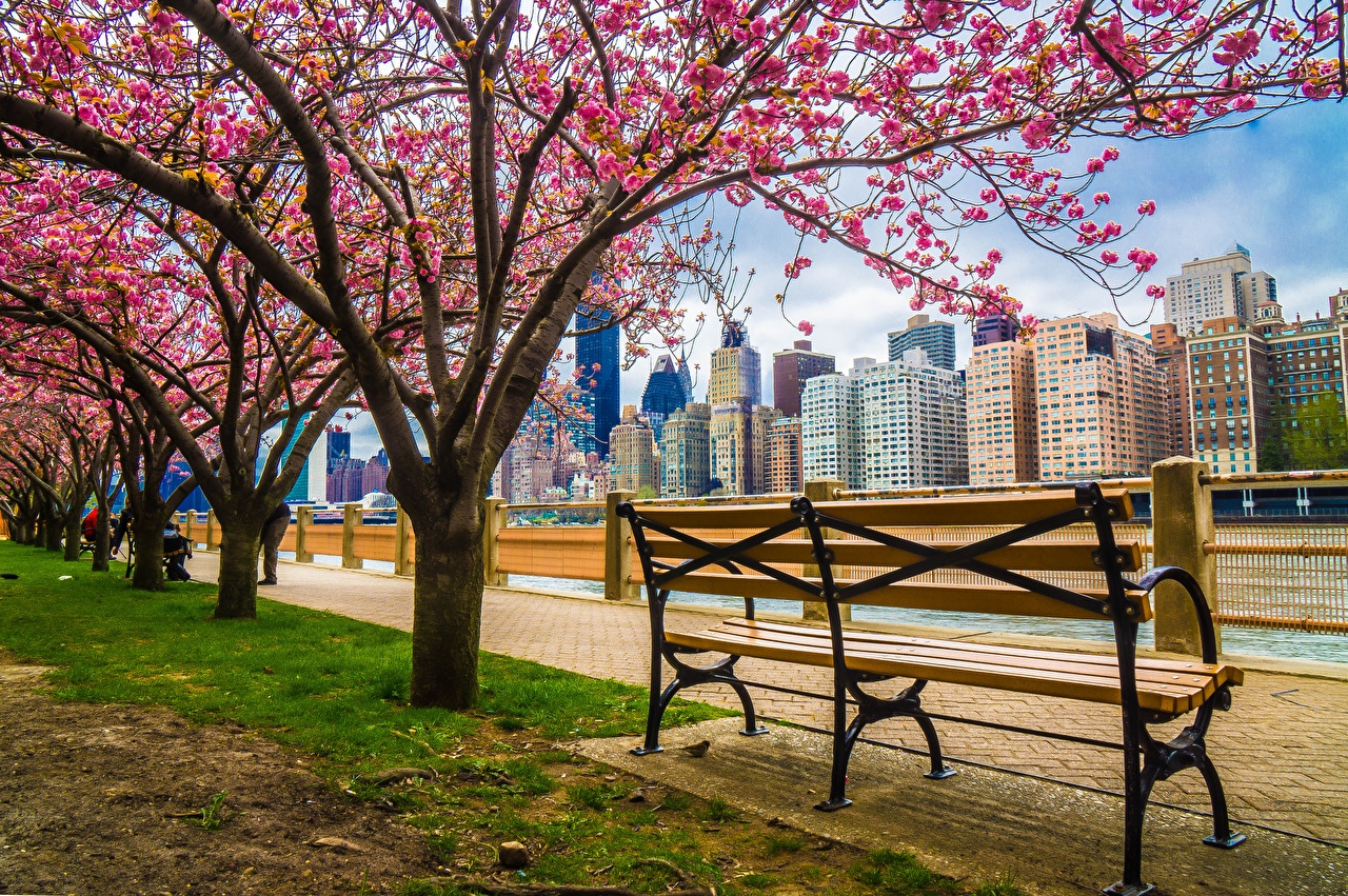 Photo New York City USA HDRI Bench Waterfront Houses Cities Flowering trees HDR Building