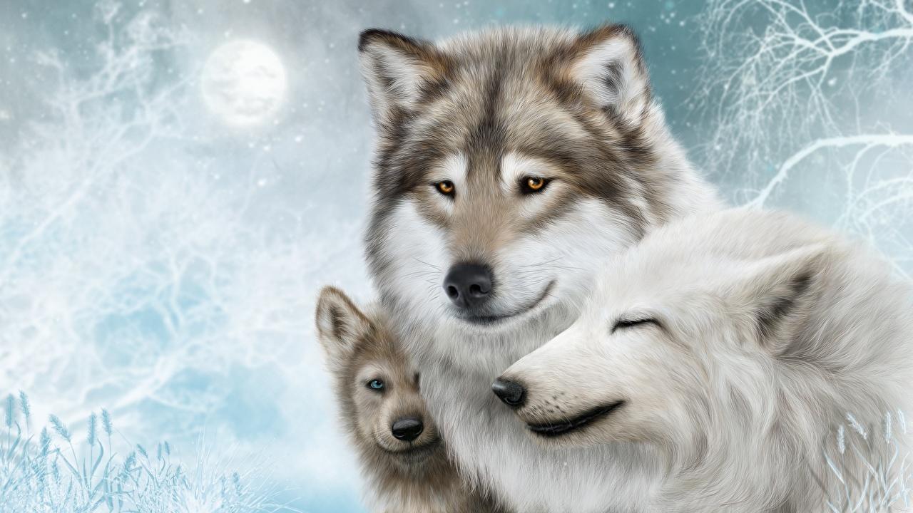 Desktop Hintergrundbilder Wölfe Drei 3 ein Tier Gezeichnet Wolf Tiere